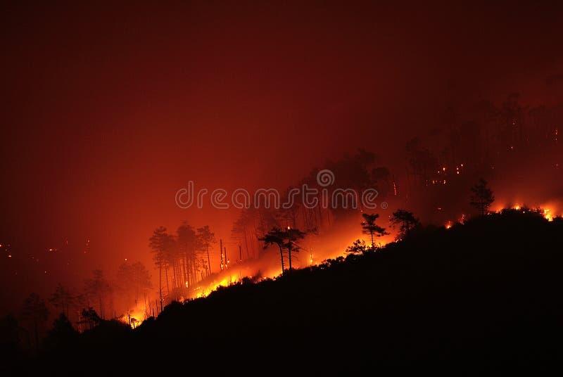Branden till och med trädet royaltyfria foton