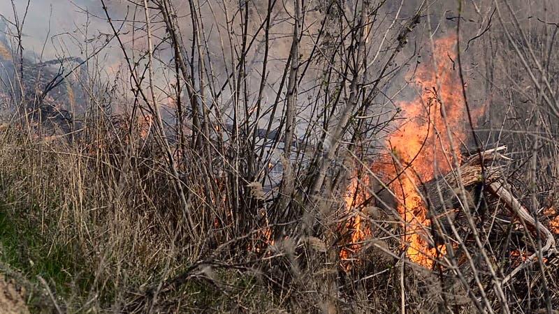 Branden toe te schrijven aan het brandbare droge gras stock footage