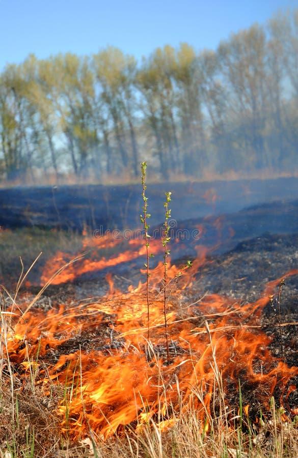 Brandend bos stock afbeelding