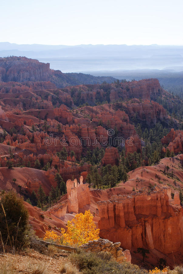 Brandend Bush in Bryce Canyon stock afbeelding