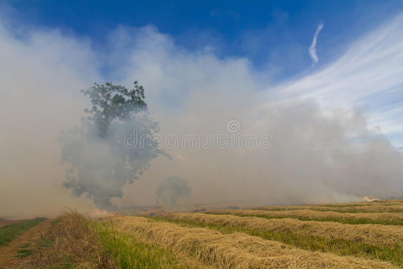 Brandend rijststoppelveld royalty-vrije stock afbeelding