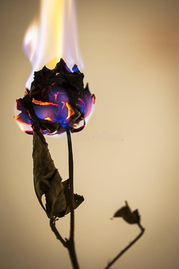 Brandende bloem stock foto's