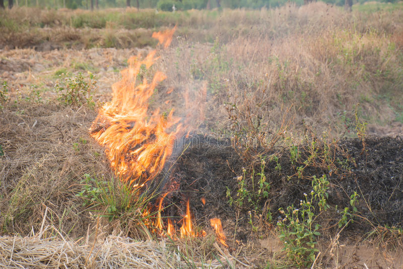 Brandende de herfstgebieden stock afbeeldingen