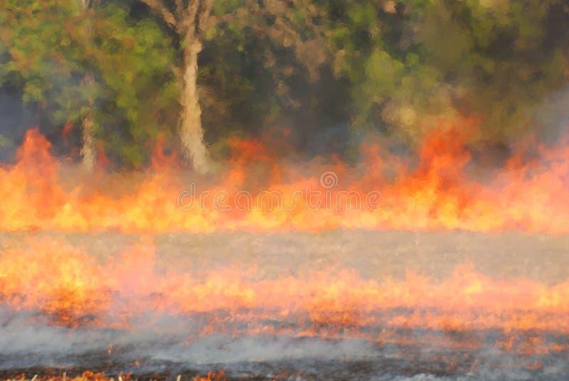 brandgräs arkivfoton