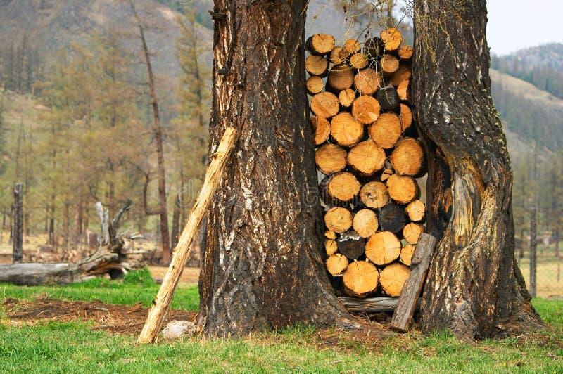 brandhout stock foto's