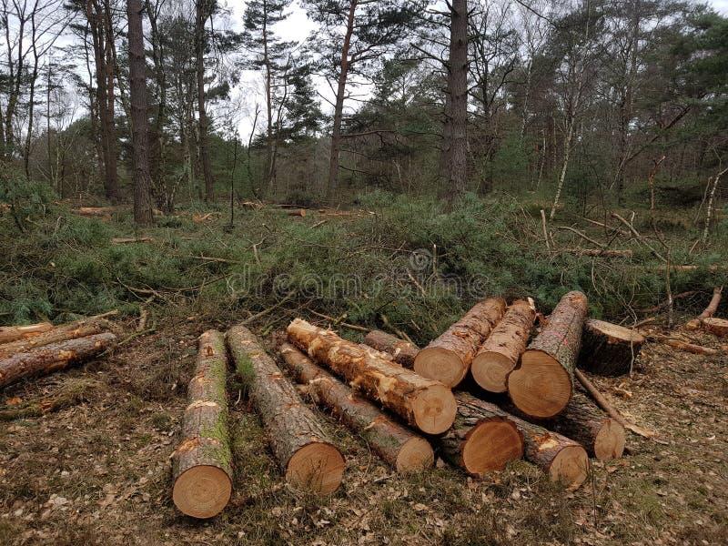 Brandhout in het bos royalty-vrije stock fotografie