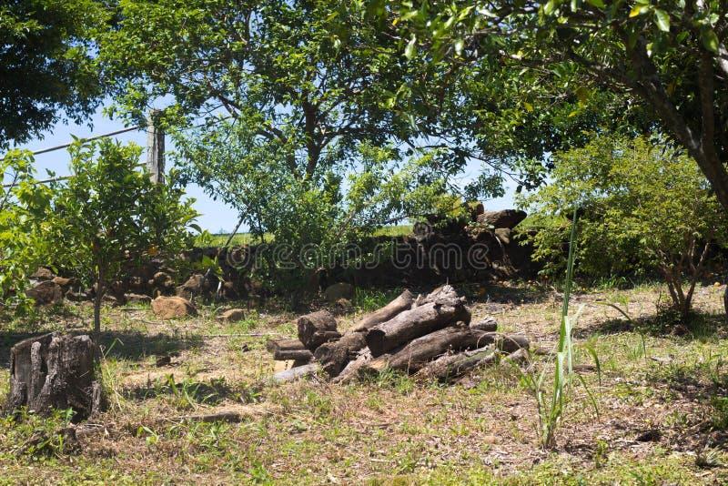 Brandhout in het bos stock fotografie