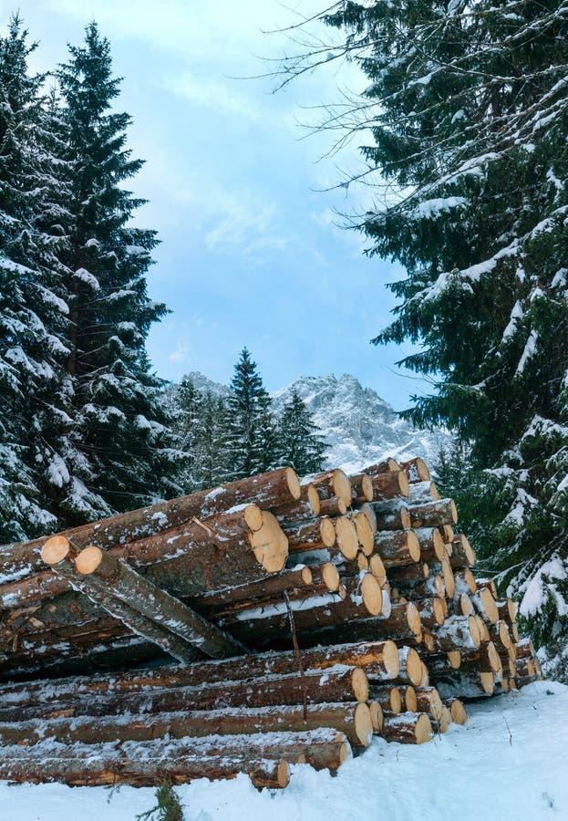 Brandhout langs de winterweg van het land royalty-vrije stock foto