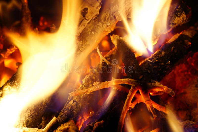 Brandhout van de boom. royalty-vrije stock fotografie