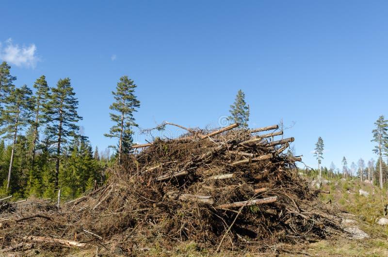 Brandhout van het felling van residu's royalty-vrije stock afbeeldingen