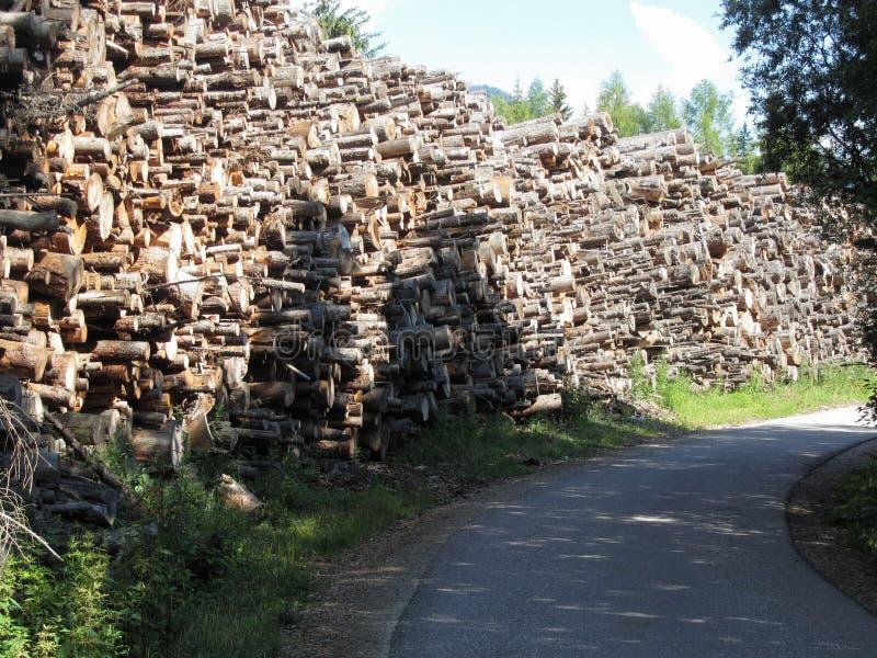 Brandhoutstapel die in het bos bij de zomer wordt gestapeld Zuid-Tirol, Itali? royalty-vrije stock afbeeldingen