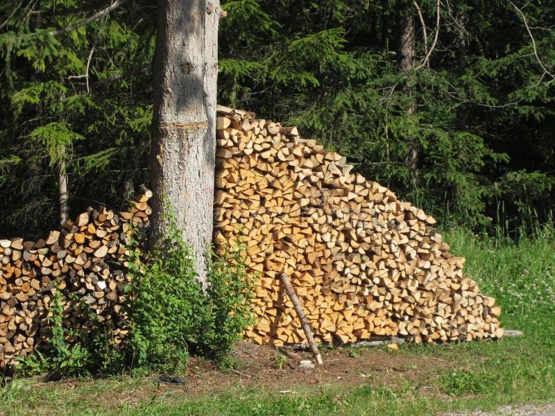 Brandhoutstapel die in het bos bij de zomer wordt gestapeld Zuid-Tirol, Itali? stock fotografie