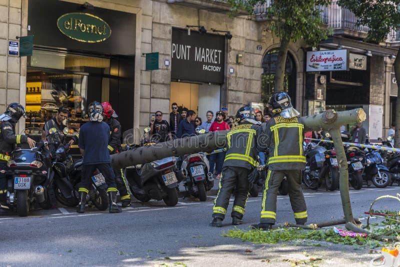 Brandmän som drar ett stupat träd i mitt av gatan arkivbild