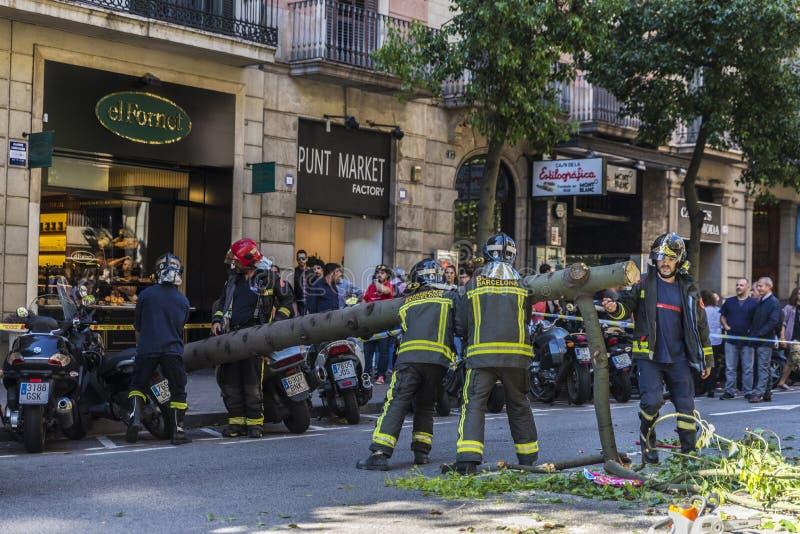 Brandmän som drar ett stupat träd i mitt av gatan royaltyfria foton