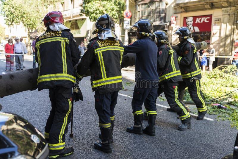 Brandmän som drar ett stupat träd i mitt av gatan royaltyfria bilder