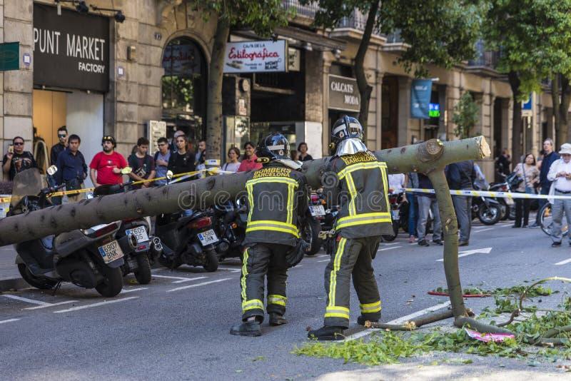 Brandmän som drar ett stupat träd i mitt av gatan arkivfoton