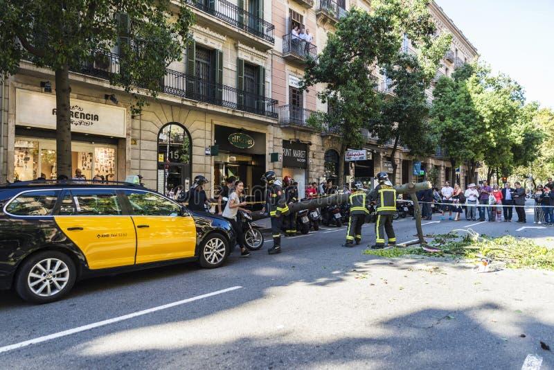 Brandmän som drar ett stupat träd i mitt av gatan fotografering för bildbyråer