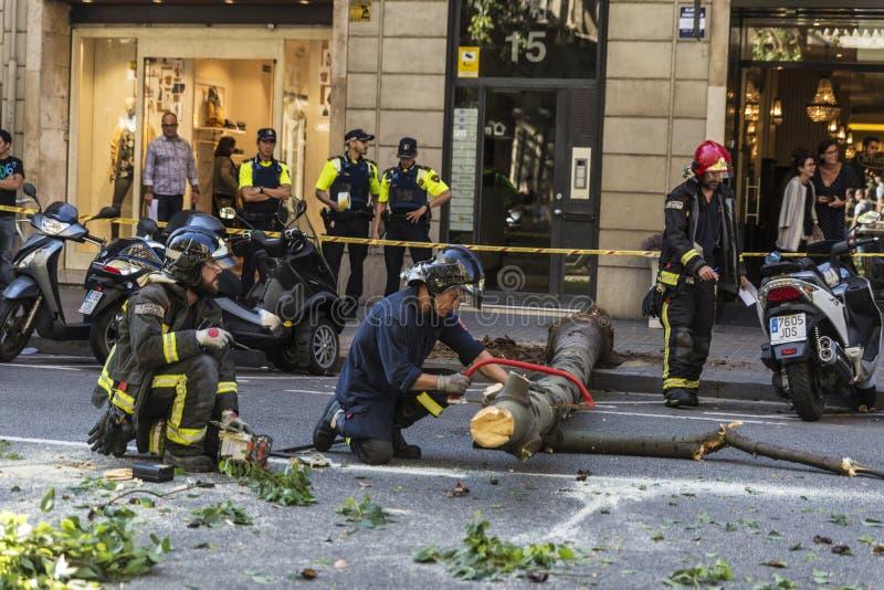 Brandmän som drar ett stupat träd i mitt av gatan arkivbilder