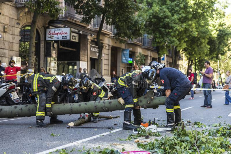 Brandmän som drar ett stupat träd i mitt av gatan royaltyfri foto
