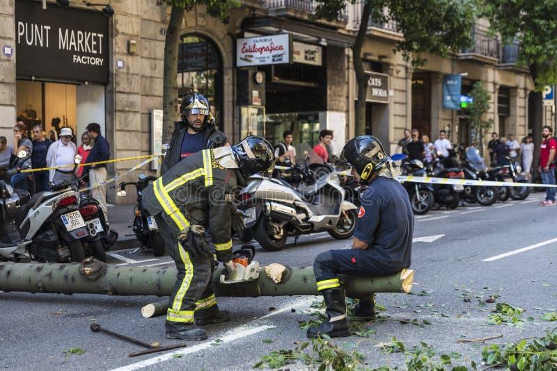 Brandmän som drar ett stupat träd i mitt av gatan royaltyfri bild