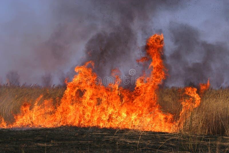 Brandschott lizenzfreie stockfotos
