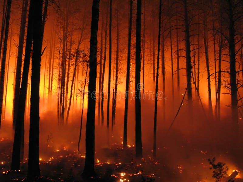 brandskog arkivbild