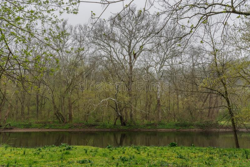 Brandywine creek in the early spring. With a light rain falling trees are just budding in a bright green and tiny yellow flowers are in the new grass stock photography