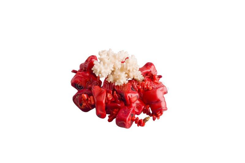 Branelli del corallo rosso e corallo immagini stock