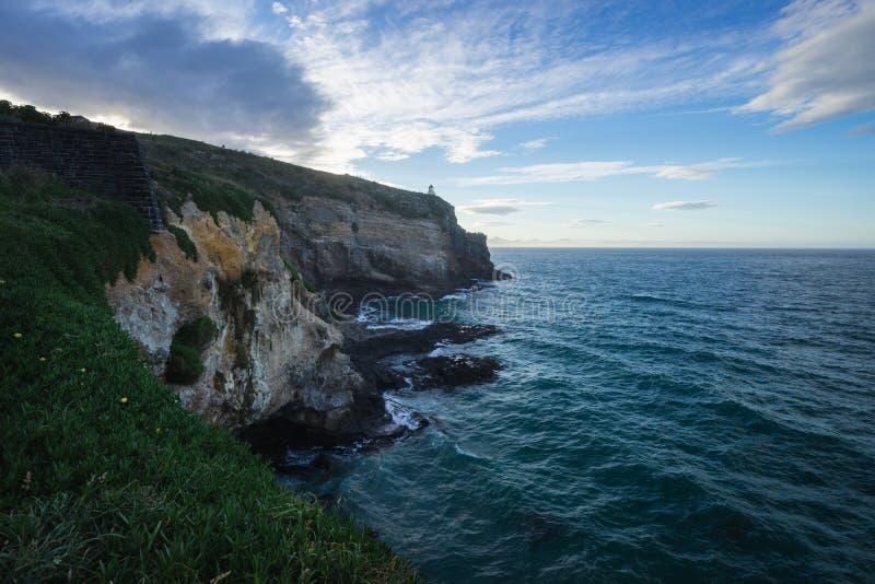 Brant klippa på havet i Dunedin royaltyfri foto