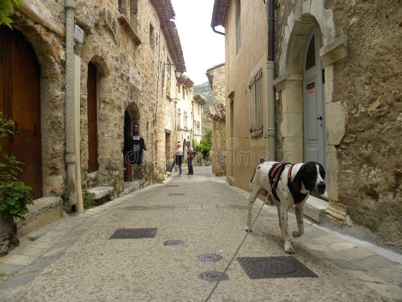 Braque d 'auvergne en Santo-guilhem-le-desierto, un pueblo del perro en el herault, Languedoc, Francia fotos de archivo