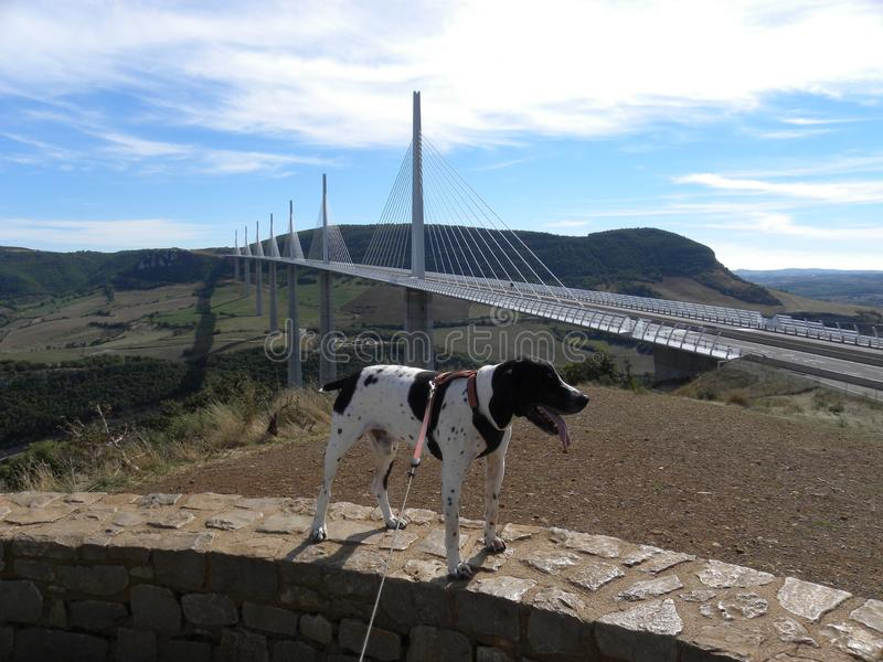 Braque d 'auvergne y Viaduc del perro de Millau, sobre el río el Tarn, Francia fotos de archivo