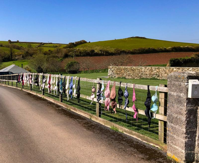Bras hung from a fence. Womens bra hung from a fence on a sunny day in the spring. Ladies underwear lingerie royalty free stock images