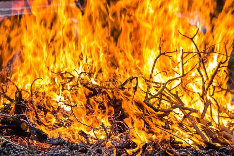 Brasan bränner upp filialerna nära arkivfoton