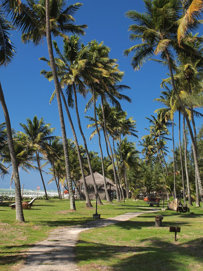 Brasilian kust arkivbilder