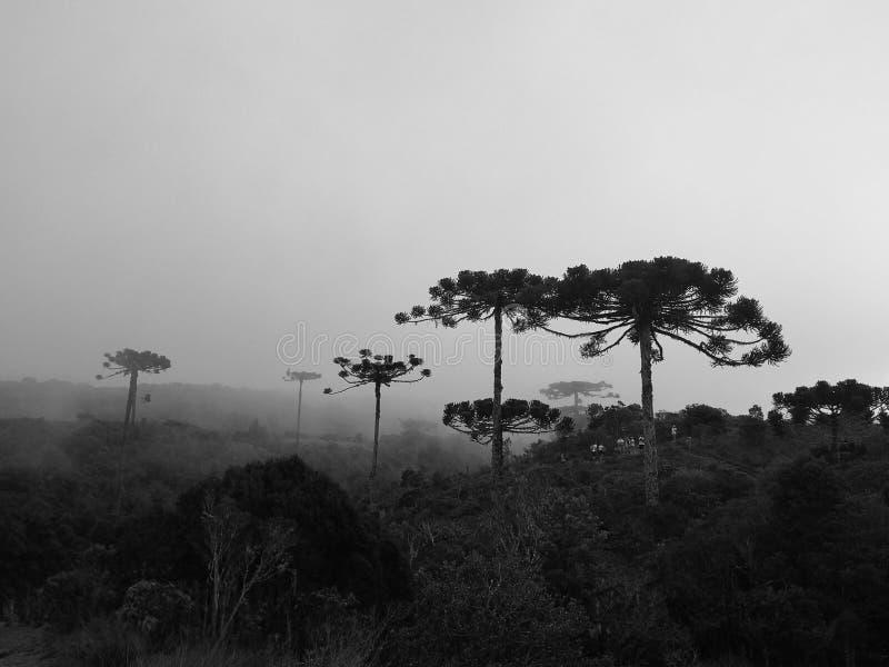 Brasilianen sörjer i nationalpark av Aparados da Serra royaltyfria bilder