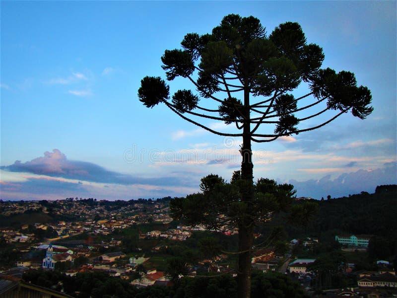 Brasilianen sörjer trädet över staden royaltyfria bilder