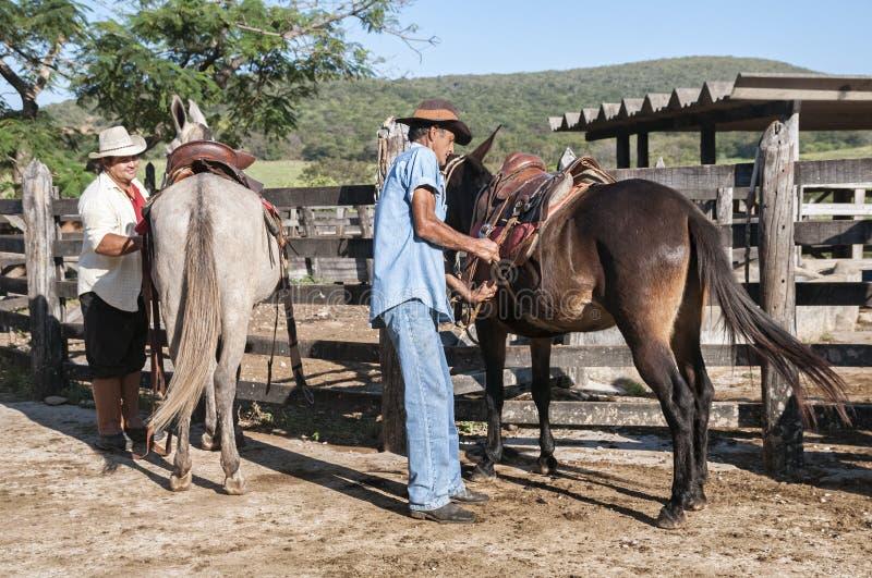 Brasilianische Cowboys bereiten Maultiere vor stockfotografie