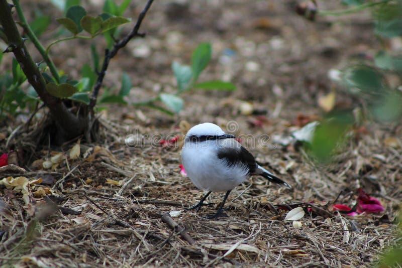 Brasilianischer Vogel stockfoto