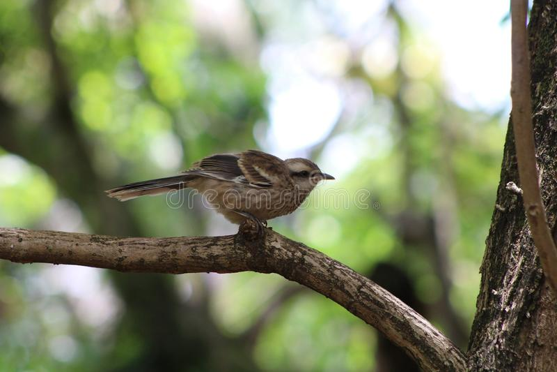 Brasilianischer Vogel lizenzfreie stockfotografie