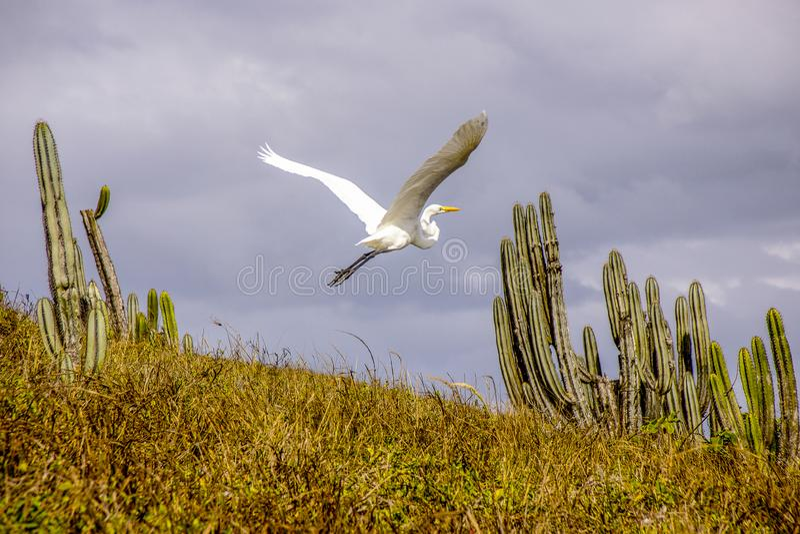 Brasilianska fåglar utomhus arkivfoto