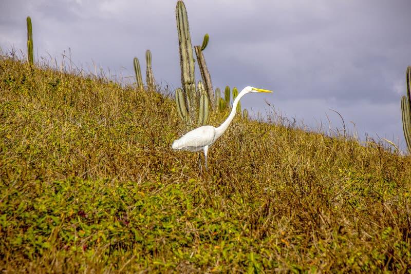 Brasilianska fåglar utomhus royaltyfria bilder