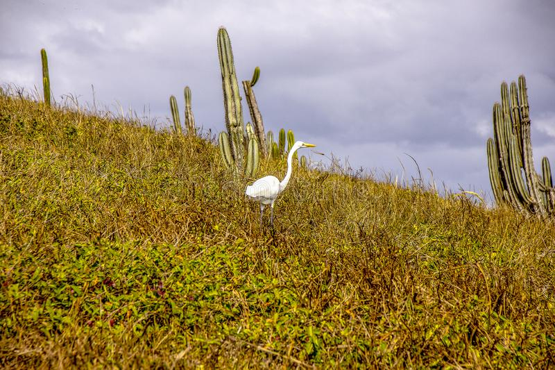 Brasilianska fåglar utomhus royaltyfri fotografi