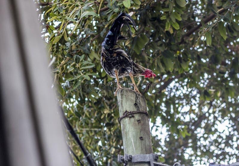 Brasilianska fåglar utomhus royaltyfri bild