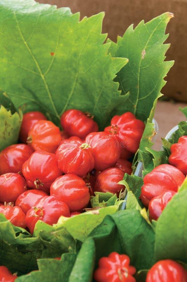 brasilianskt Cherry arkivfoton