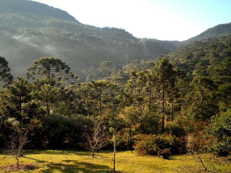 Brasilien bygd Forest Landscape royaltyfri bild