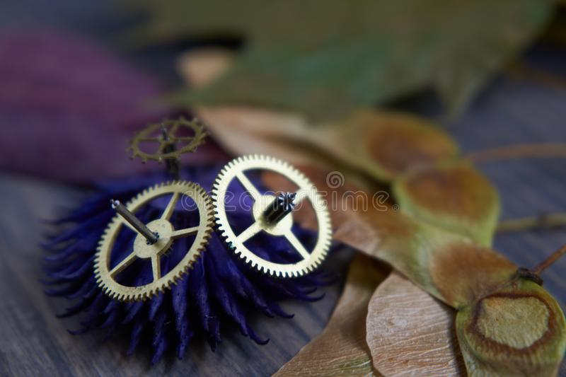 Brass cog wheels, autumn leaves on wood background royalty free stock photos