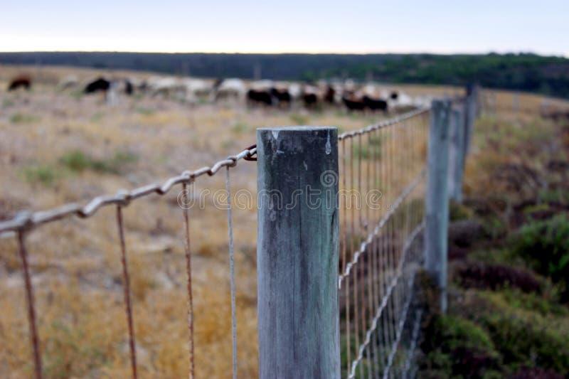 Brass Frame Fence Free Public Domain Cc0 Image