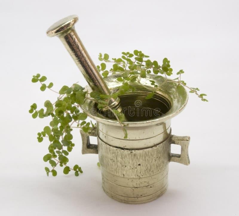 Brass Mortar. Brass Mortal with Helxinev (Seleirolia Soleirolii royalty free stock photos