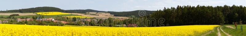 Brassica Napus do campo do canola ou da couve-nabi?a da colza imagens de stock
