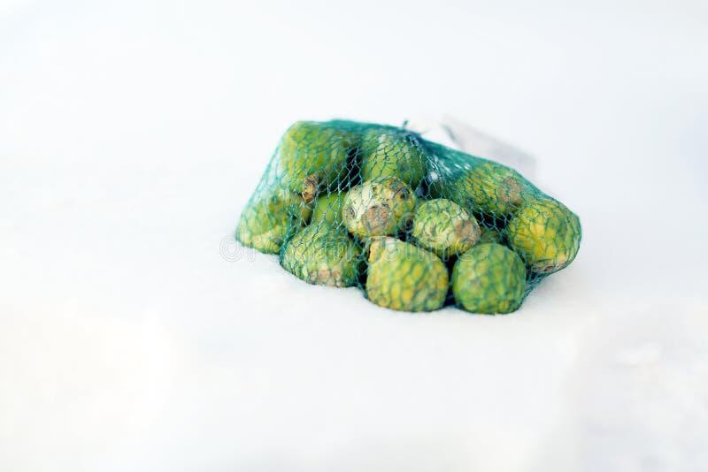 Brassica Oleracea Gemmifera Gruppe stockbilder